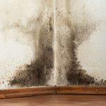 Hoe komt schimmel in een huis?